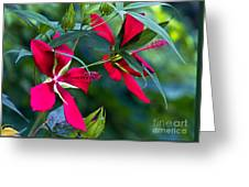 Red Twins One Greeting Card