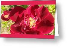 Red Velvet Roses Greeting Card