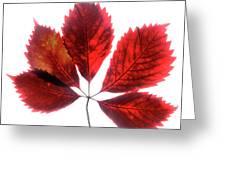 Red Vine Leaf Greeting Card