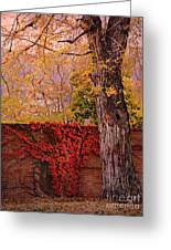 Red Vine With Maple Tree Greeting Card