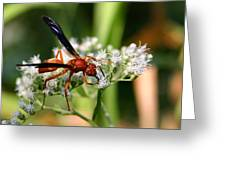 Red Wasp On Lace Greeting Card