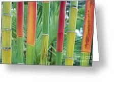 Red Wax Palm Stalks Greeting Card