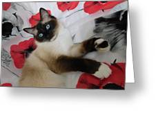 Red White And Ragdoll Kitty Cat Silktapestrykittenstm  Greeting Card