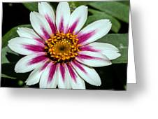 Red White And Yellow Flower Greeting Card
