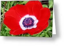 Red White N Blue Greeting Card