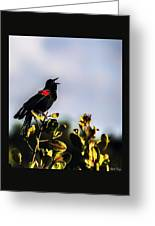 Red Wing Black Bird  Greeting Card
