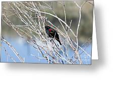 Red Winged Black Bird At Chatfield Greeting Card