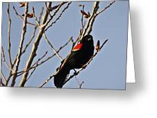 Red Winged Black Bird Greeting Card