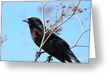 Red-winged Blackbird . 40d5718 Greeting Card