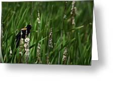 Red-winged Blackbird Calling Greeting Card