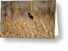 Red Winged Blackbird Greeting Card by Ernie Echols