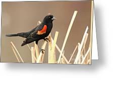 Red Winged Blackbird I I Greeting Card