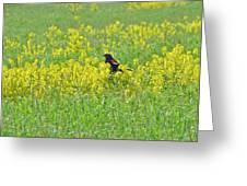 Red-winged Blackbird In Wild Mustard Greeting Card