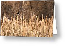 Red Winged Blackbird On Cattails Greeting Card