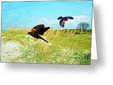 Red-winged Blackbirds Greeting Card