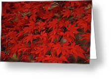 Red With Envy Greeting Card