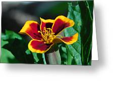 Red/yellow Side View 4-24-16 Greeting Card