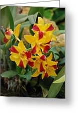 Red Yellow Orchids Greeting Card
