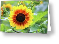 Red Yellow Sunflower Greeting Card