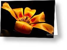 Red-yellow Tulip 1 Greeting Card