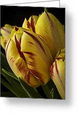 Red Yellow Tulip Greeting Card