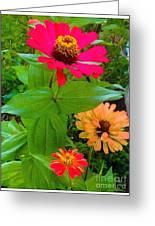 Red Yellow Zinnia Flowers Greeting Card