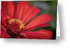 Red Zina Greeting Card