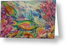 Redband Parrotfish Greeting Card