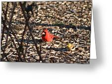 Redbird And American Golden Finch Greeting Card