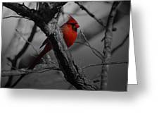 Redbird Greeting Card