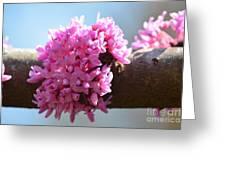 Redbud Beginnings Greeting Card