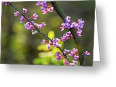 Redbud Bloom  Greeting Card