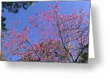 Redbud In Bloom Greeting Card