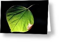 Redbud Leaf Greeting Card