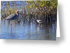Reddish Egret And Yellowlegs Greeting Card