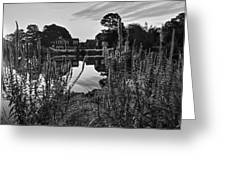 Redd's Pond Lupines Sunrise Black And White Greeting Card