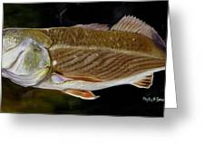 Redfish Study  Greeting Card