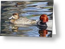 Redhead Duck Pair Greeting Card
