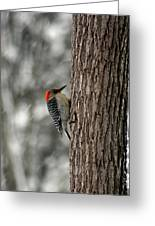 Redheaded Woodpecker Greeting Card