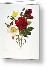 Redoute: Hellebore, 1833 Greeting Card