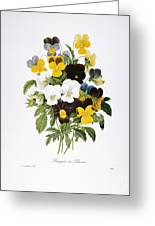Redoute: Pansy, 1833 Greeting Card