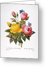 Redoute: Roses, 1833 Greeting Card by Granger