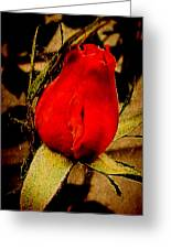 Redrose Greeting Card