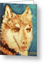 Red's Wolf Greeting Card