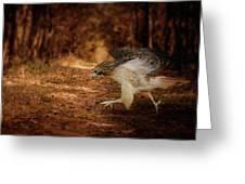 Redtail Morning Run Hawk Art Greeting Card