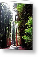 Redwood Forest 5 Greeting Card