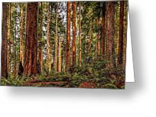 Redwood Forest Landscape Greeting Card