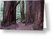 Redwood Grove Greeting Card