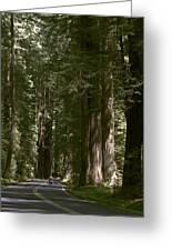 Redwood Highway Greeting Card