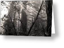 Redwood Mystery Greeting Card